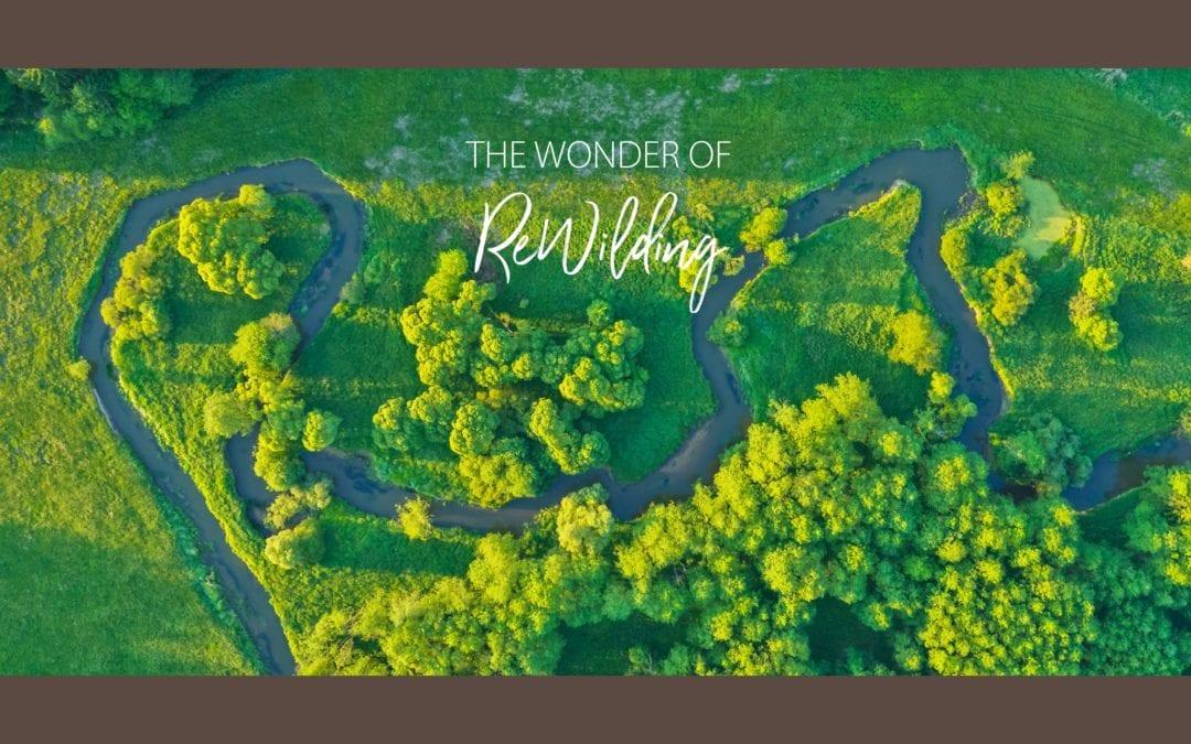 The Wonder of Rewilding